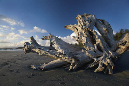 Driftwood on a beach Stock Photo - 7551704