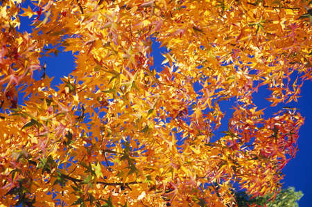 Autumn leaves Stock Photo - 7559192