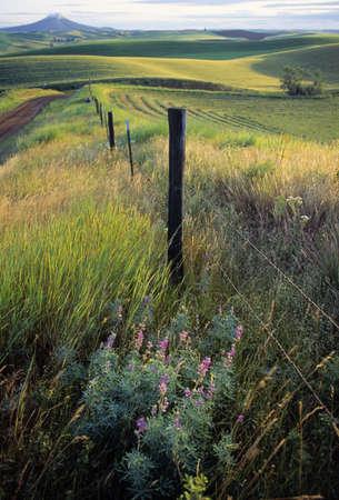 Barbed-wire fenceline Stock Photo - 7559158