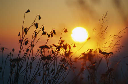 Sunrise behind tall grasses Stok Fotoğraf