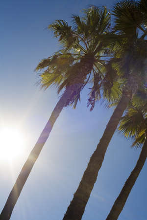 curtis: Palm trees in sunshine LANG_EVOIMAGES