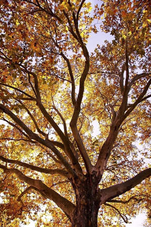 Sun filtering through a tree Stock Photo - 7559189