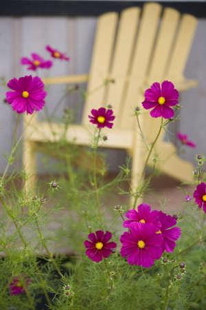 Fleurs dans une arrière-cour.