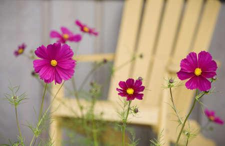 자주색 꽃
