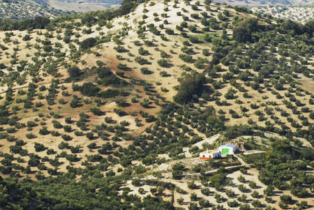 Farmhouse surrounded by olive trees in Andalucia, Spain Фото со стока - 7559496