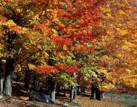 Autumn forest   Stock Photo - 7559563
