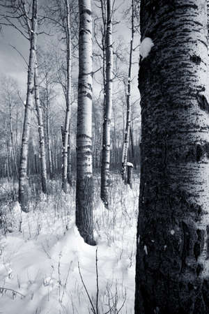 Forest in the winter Stock Photo - 7559516