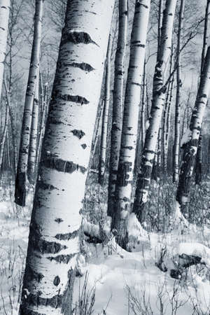 winter: Winter forest