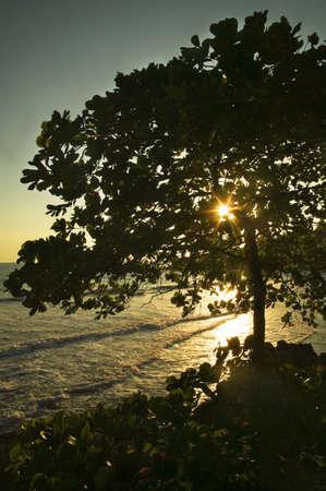 De zon schijnt door een grote boom en op water  Stockfoto