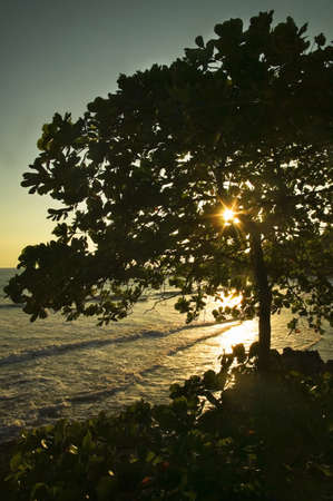The sun shining through a large tree and down upon water Stock Photo - 7559489