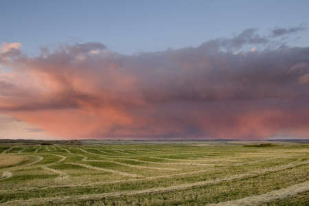 Storm cloud over field in Alberta, Canada   Stock Photo - 7559385