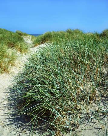 Grasses, Sand Dunes, Dollymount Strand, Dublin Bay, Ireland Stock Photo - 7559544