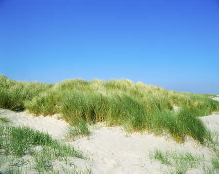 Grasses, Sand Dunes, Dollymount Strand, Dublin Bay, Ireland Stock Photo - 7559473