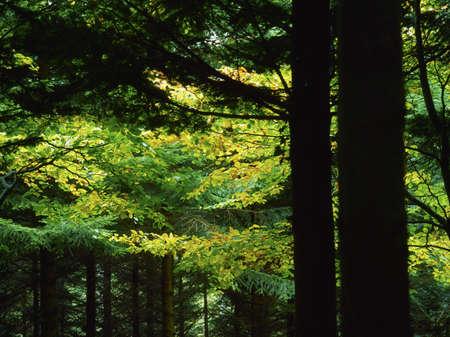 森の中 写真素材