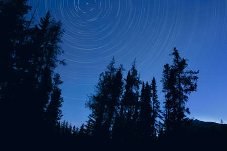 starry night: Twilight tree silhouettes and stars with time lapse photography, Jasper National Park, Alberta, Canada
