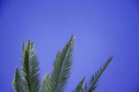 Palm tree leaves, Arizona, U.S.A Stock Photo - 7559269
