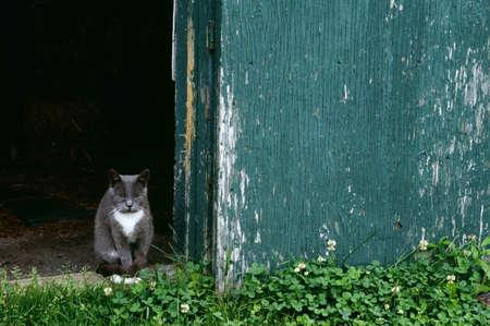 Cat in a doorway Stock Photo - 7559463