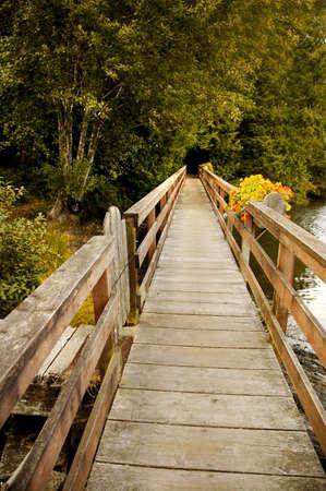 vlonder: Houten brug in een forest