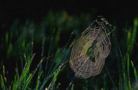 Spider web covered in dew photo