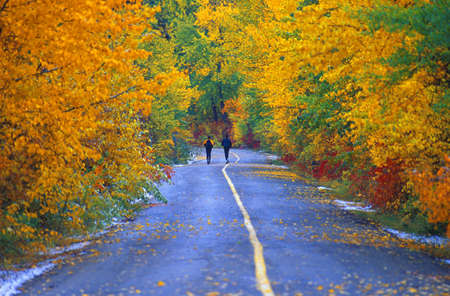 don hammond: Two people jogging on road in park in autumn
