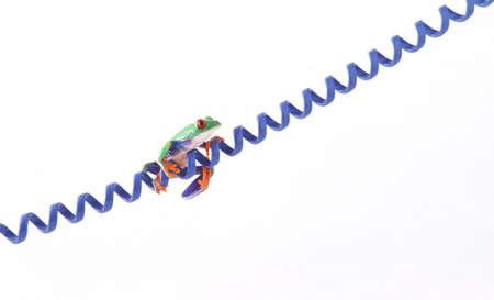 corey hochachka: A frog on a cord Stock Photo