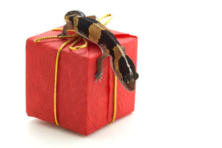 corey hochachka: Lizard on parcel