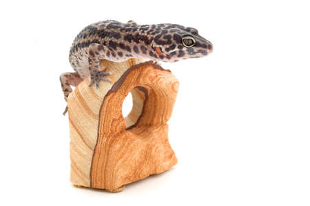 Reptile sitting on wood