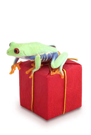 christmas frog: Frog sitting on red package