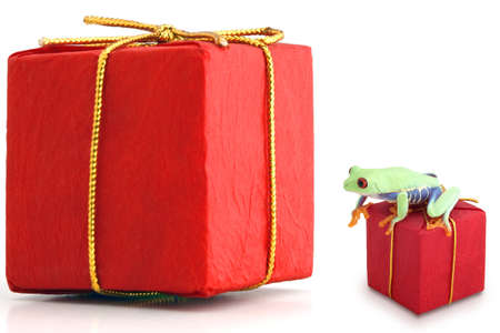 humor: Large and small red packages with frog Stock Photo
