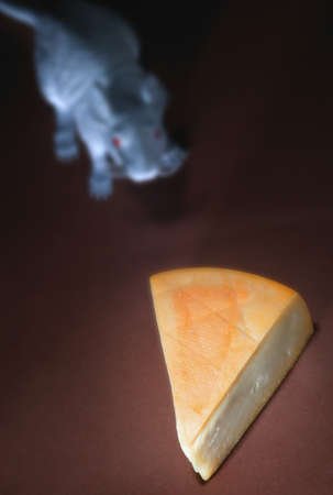 Piece of cheese with rodent Stock Photo - 8242030