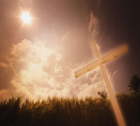 A cross against a field of sugar cane Stock Photo - 8241499