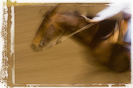 Moving horse Stock Photo
