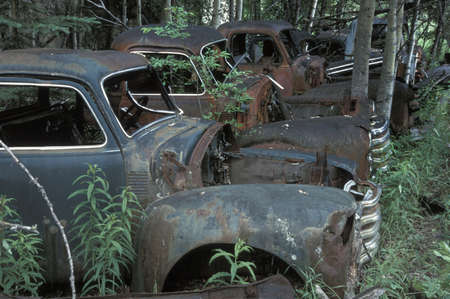 corey hochachka: Old vehicles in a forest Stock Photo