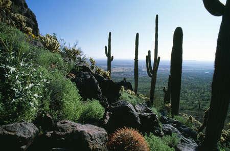 Desert landscape with various cacti photo