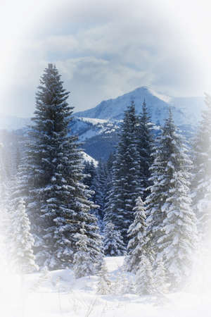 Forest in the winter Stock Photo - 8242145