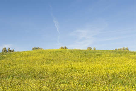 countrysides: Hillside with blue sky