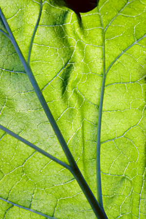 Close-up leaf viens