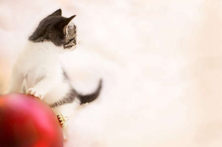knorr: Kitten playing with ornament Stock Photo