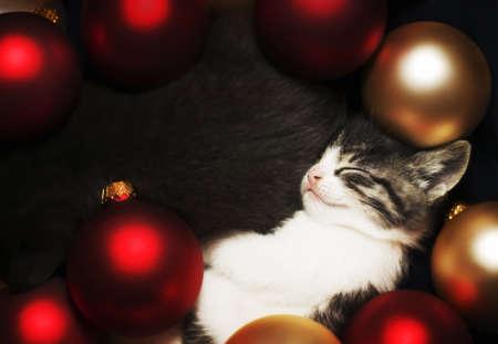 Kitten sleeping in decorations