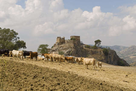 Castle and cattle in Spain Stock Photo - 8242113