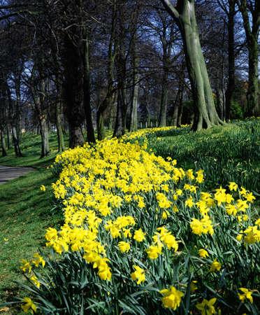 Ormeau Park, 벨파스트, 아일랜드 스톡 콘텐츠