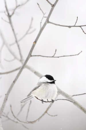 wildanimal: Bird on a branch