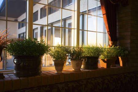 Vensterbank vol met planten Stockfoto