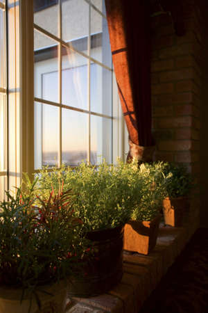 architectural interiors: Window sill full of plants