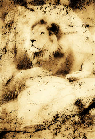Old photograph of a lion on a rock photo