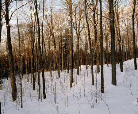 Snowy forest Stock Photo - 8244030