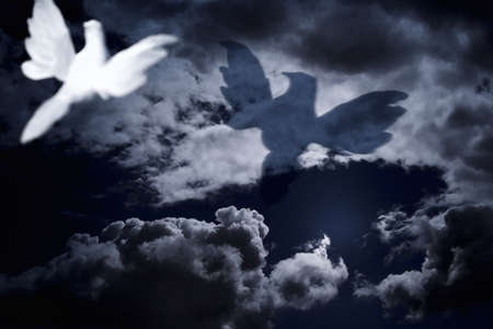 belief system: White dove flying into cloudy skies