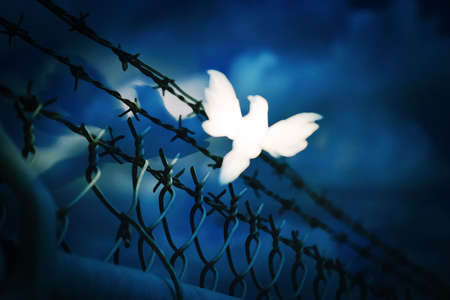 endangerment: White bird sitting on barbed wire fence Stock Photo
