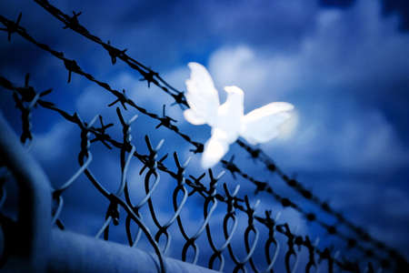 White bird sitting on barbed wire fence Stock Photo - 8242126