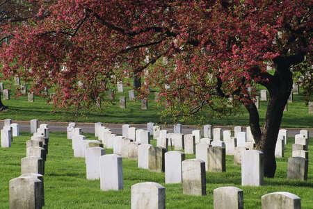 Arlington National Cemetery in Virginia, USA Stock Photo - 8243991